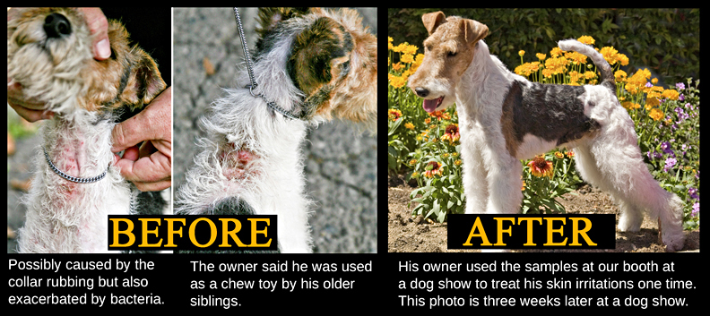 Terrier Before and After