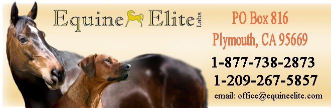Equine Elite Labs PO  Box 816 Plymouth CA 95669